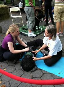 Central Park Dog Celebration '11